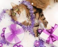 Christmas on white Stock Photo