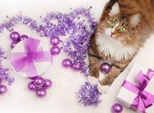 Christmas on white Royalty Free Stock Image