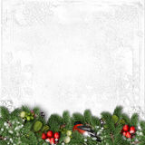 Christmas white background with bullfinch, holly and branches Royalty Free Stock Images