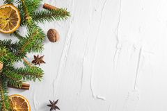 Christmas white background fresh twigs conifer tree dried citrus royalty free stock images