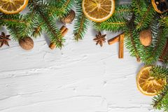 Christmas white background fresh twigs conifer tree dried citrus stock photo