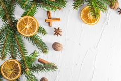 Christmas white background fresh twigs conifer tree dried citrus royalty free stock image