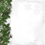Christmas white background with holly and branches Royalty Free Stock Photography
