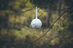 Christmas white ball hanging on tree branch Stock Images