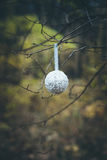 Christmas white ball hanging on tree branch Royalty Free Stock Image