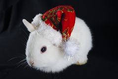 Christmas white rabbit Royalty Free Stock Images