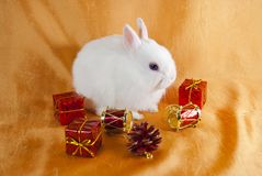 Christmas white rabbit 2011 Stock Photography