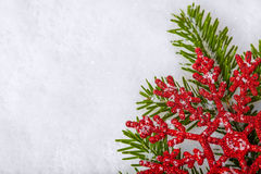 Christmas white seasonal background. With snow, red decorations and spruce Stock Photography