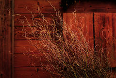 Christmas Willow Tree Stock Images