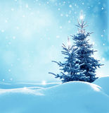 Christmas winter background with fir tree Royalty Free Stock Photography