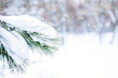 Christmas winter holiday greeting card. Christmas winter background. Fir tree branch covered with snow in winter day. The branches of the snow covered green stock photo