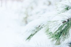Christmas winter holiday greeting card. Christmas winter background. Fir tree branch covered with snow in winter day. The branches of the snow covered green stock photos