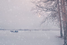 Christmas winter background with snow and trees stock photos