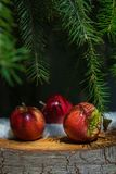 Few red apples lying on old stump tree under green branches of fir tree with white snow. Christmas winter background royalty free stock images