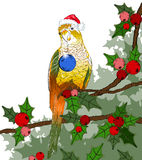 Christmas winter bird (parrot) Royalty Free Stock Photography