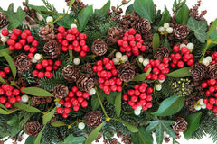 Christmas and Winter Flora Stock Photography
