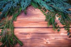 Christmas winter foliage Stock Photography