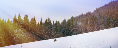 Christmas winter landscape Stock Photography