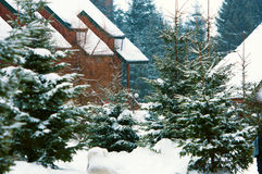 Christmas winter landscape Stock Images