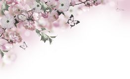 Christmas winter landscape. Flowers background with amazing spring sakura with butterflies. Flowers of cherries royalty free stock photos
