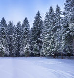 Christmas winter landscape Royalty Free Stock Photos