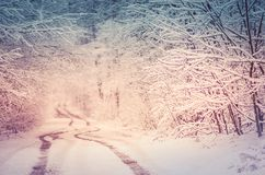 Forest road covered with snow. Magical snowy road. Christmas winter night. Fairy forest covered with snow Stock Images