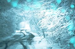 Forest road covered with snow. Magical snowy road. Christmas winter night. Fairy forest covered with snow Stock Photo