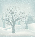 Christmas Winter Outdoor Background, Snowfall and Stock Photography