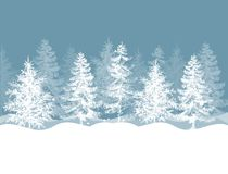 Free Christmas Winter Pine Trees Forest Stock Images - 162134814