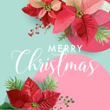 Christmas Winter Poinsettia Flower Banner, Graphic Background, Floral December Invitation, Flyer or Card. Modern Front Page Stock Images