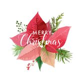 Christmas Winter Poinsettia Flower Card or Background with place for your text. In vector Royalty Free Stock Photo
