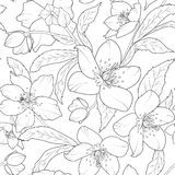 Christmas winter rose hellebore floral pattern Stock Image