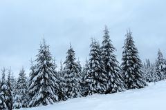Christmas winter wonderland in the mountains with snow covered t. Christmas winter wonderland in the mountains. Fir trees covered with snow stock photo