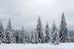 Christmas winter wonderland in the mountains with snow covered t. Christmas winter wonderland in the mountains. Fir trees covered with snow royalty free stock photos