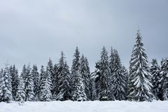 Christmas winter wonderland in the mountains with snow covered t. Christmas winter wonderland in the mountains. Fir trees covered with snow stock photos