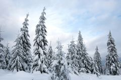 Christmas winter wonderland in the mountains with snow covered t. Christmas winter wonderland in the mountains. Fir trees covered with snow stock image