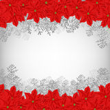 Christmas wreath. Christmas card.  Borders made of poinsettia flowers and fir branches over white background Stock Photos