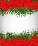Christmas wreath. Christmas card.  Borders made of poinsettia flowers and fir branches over white background Stock Photography