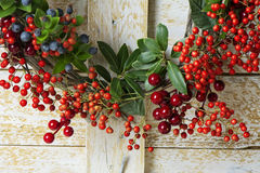 Christmas wreath of evergreen and nandian network berries Royalty Free Stock Photos