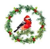 Christmas wreath - fir, mistletoe and bullfinch bird in santa hat. Watercolor Stock Photos