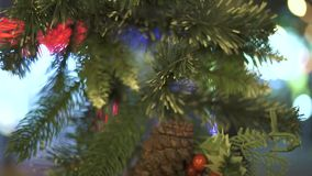 Christmas wreath from fir tree with cone and red holly berries on glass window. Close up New Year decoration green. Branches with cone and holly berries for stock footage