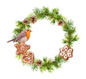 Christmas wreath with ginger cookies and robin bird. Xmas watercolor - spruce tree branches, cones. vector illustration