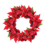 Christmas wreath from poinsettia. For your design isolated on white royalty free stock images