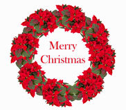 Christmas wreath from poinsettia Stock Photo