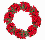 Christmas wreath from poinsettia Royalty Free Stock Photo