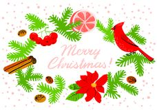 Christmas wreath with poinsettia red flower. Winter floral backg. Round with cardinal bird, grapefruit, canella, pine tree and rowan  branches. Seasonal design Stock Photo