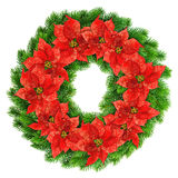 Christmas wreath red poinsettia flowers isolated on white Royalty Free Stock Photo