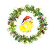 Christmas wreath, small cock in red santa`s hat. Watercolor bird Stock Image