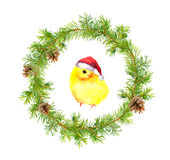 Christmas wreath, small cock in red santa`s hat. Watercolor bird Royalty Free Stock Images
