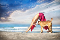 Christmas yoga with dog. By man in red trousers and Christmas hat on the beach near the ocean in India Royalty Free Stock Photo